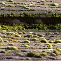 Moss Removal Beaverton Oregon